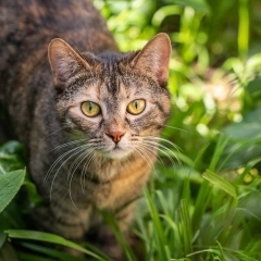 cat-jungle-photo-outdoor