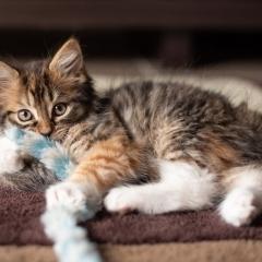 fluffy-kitten-play-photo