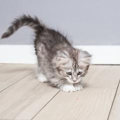 kitten-cat-tabby-photo-cute-fluffy-3