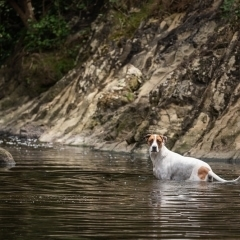 darebin-parklands-water-swimming-dog