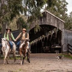 horse-dog-couple-love-rural-photo-melbourne