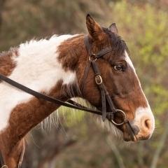 horse-rural-photo-melbourne