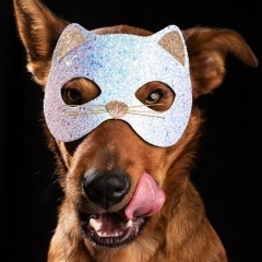 dog-disguise-licking-studio-photo-melbourne